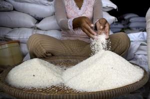 Il costo del riso ha raggiunto un picco in Cambogia nel 2008